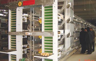 9LCDd-4200层叠式蛋鸡笼养威廉希尔公司app