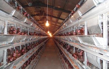 9LCDd-4128层叠式蛋鸡笼