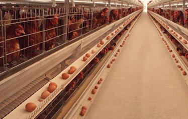 9LCDd-3150层叠式蛋鸡笼
