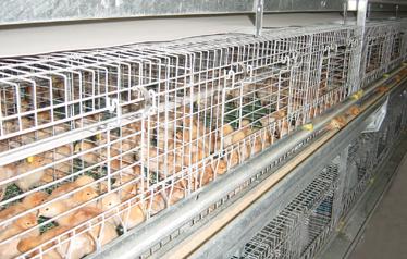 9LCDy-3216层叠式蛋鸡育雏育成笼